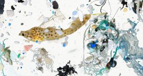 Ocean Plastic image by National Geographic