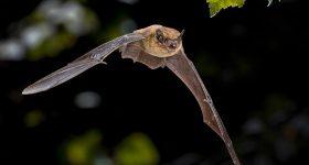 Bats on Nantucket