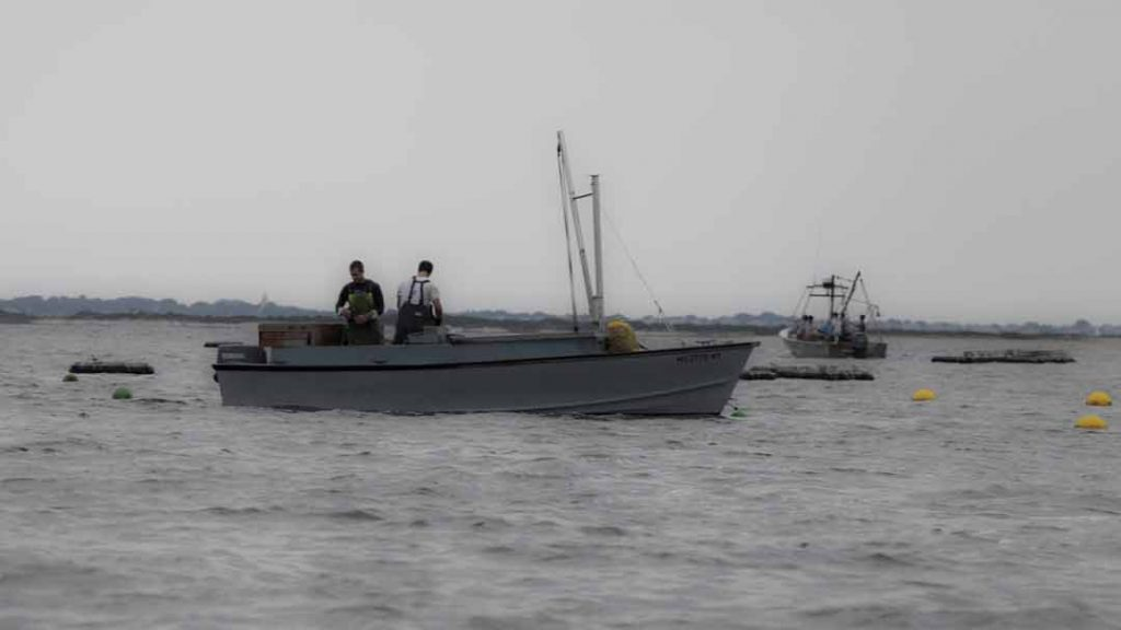 Nantucket Harbor Research