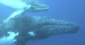 Nantucket Sound Whales