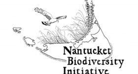 Nantucket Bio Diversity